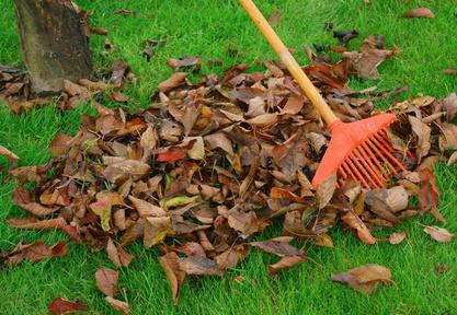 Jak odstranit spadané listí?