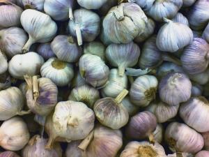 Jak pěstovat česnek ze semene
