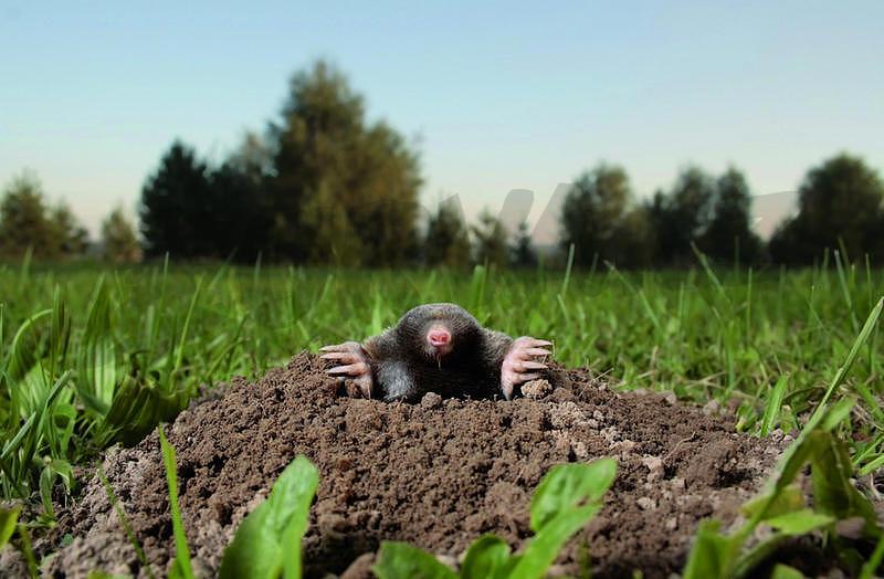 2 zásadní tipy, jak ochránit zahrádku proti škůdcům